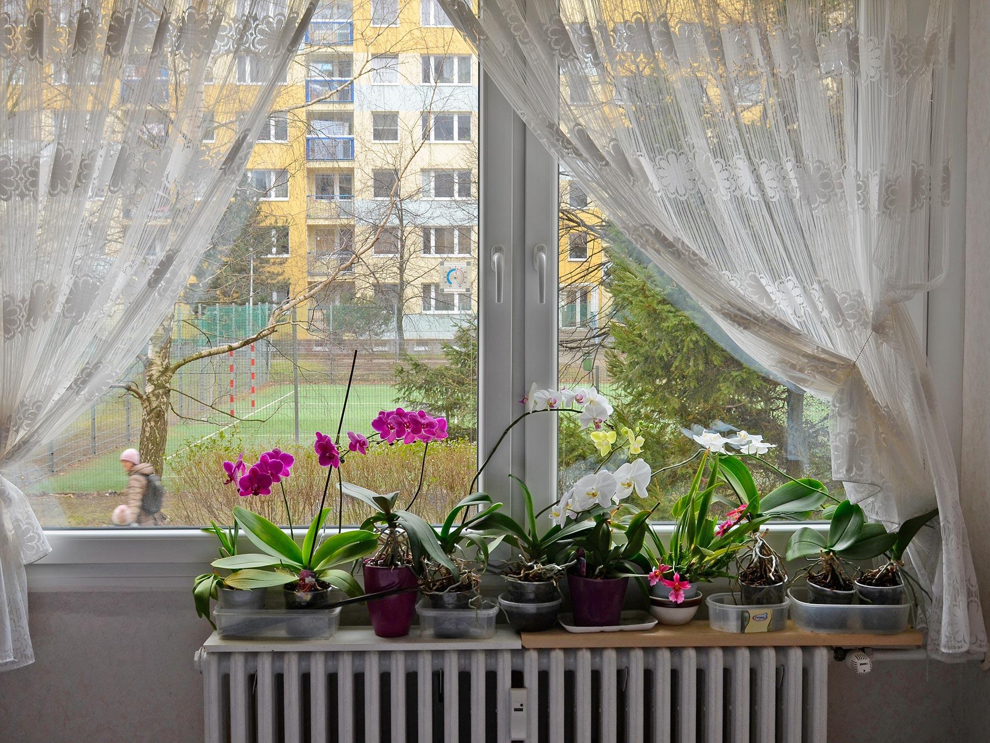 Okno zevnitř
