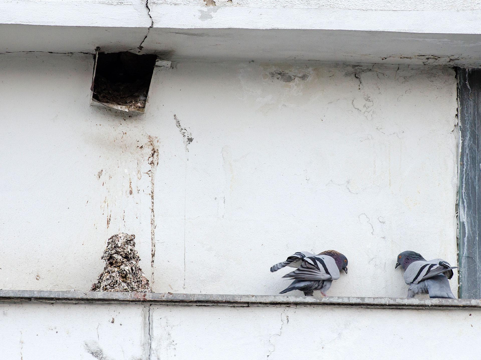 Styďte se, holubi!